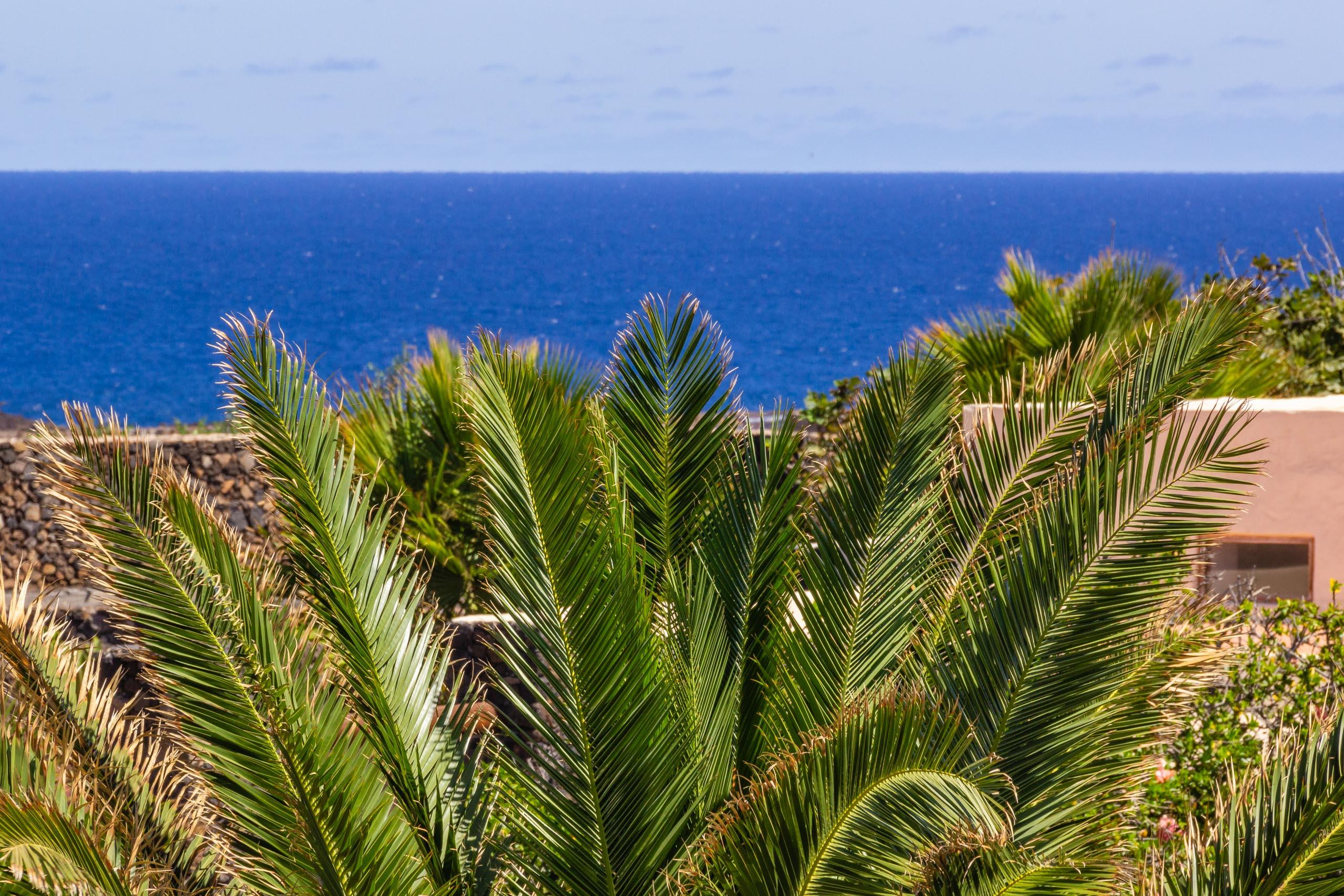 2016 09 Lanzarote GardenNeighbourhood 2 006
