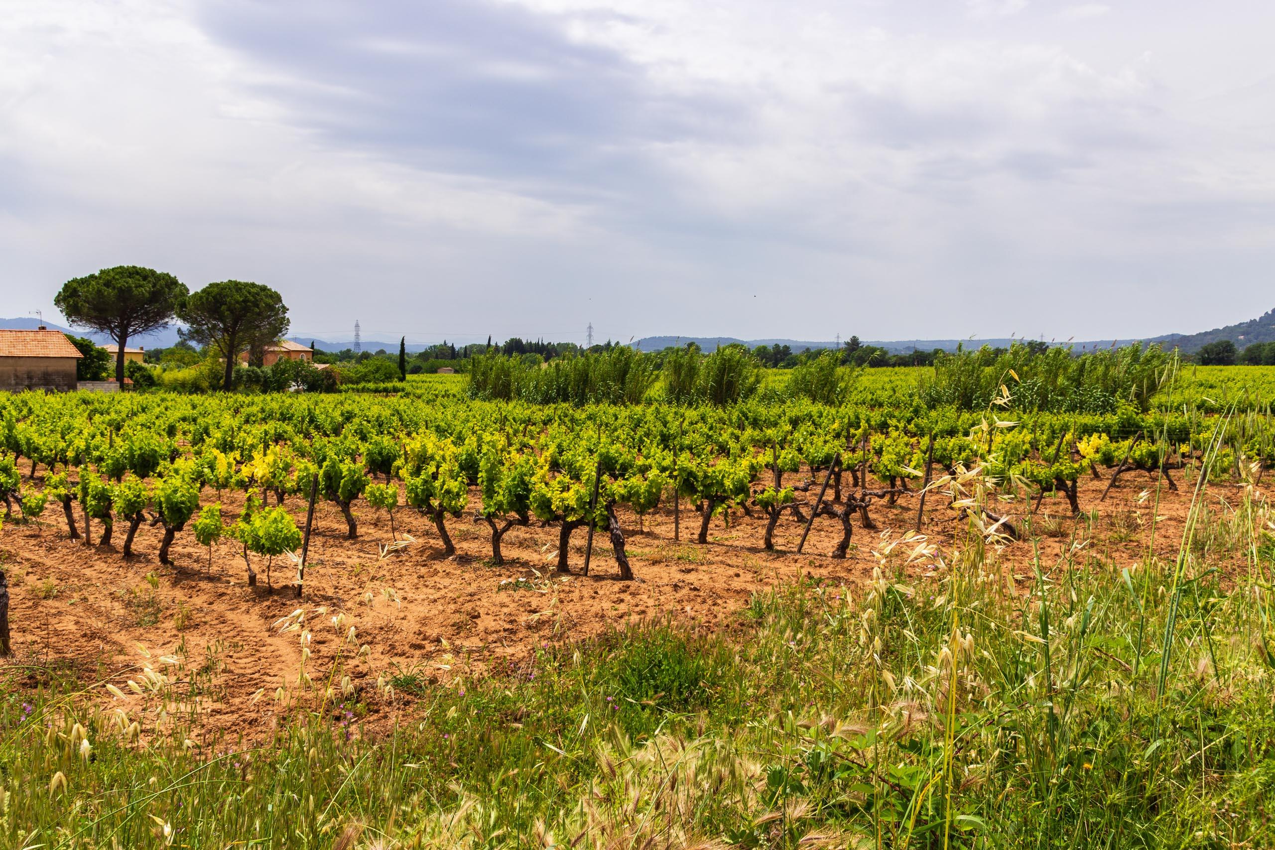 2018 05 Provence LeMitan 004