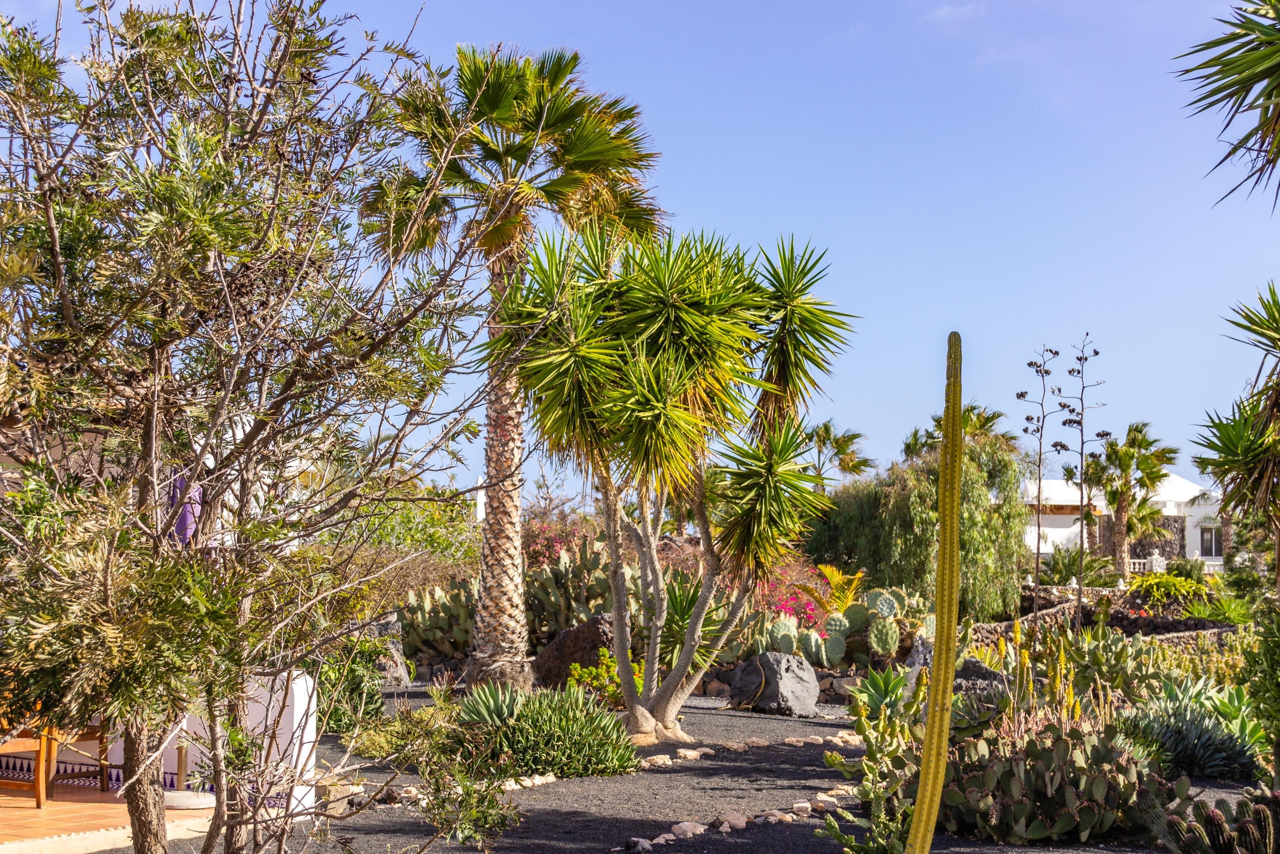 2014 02 Lanzarote Garden 001