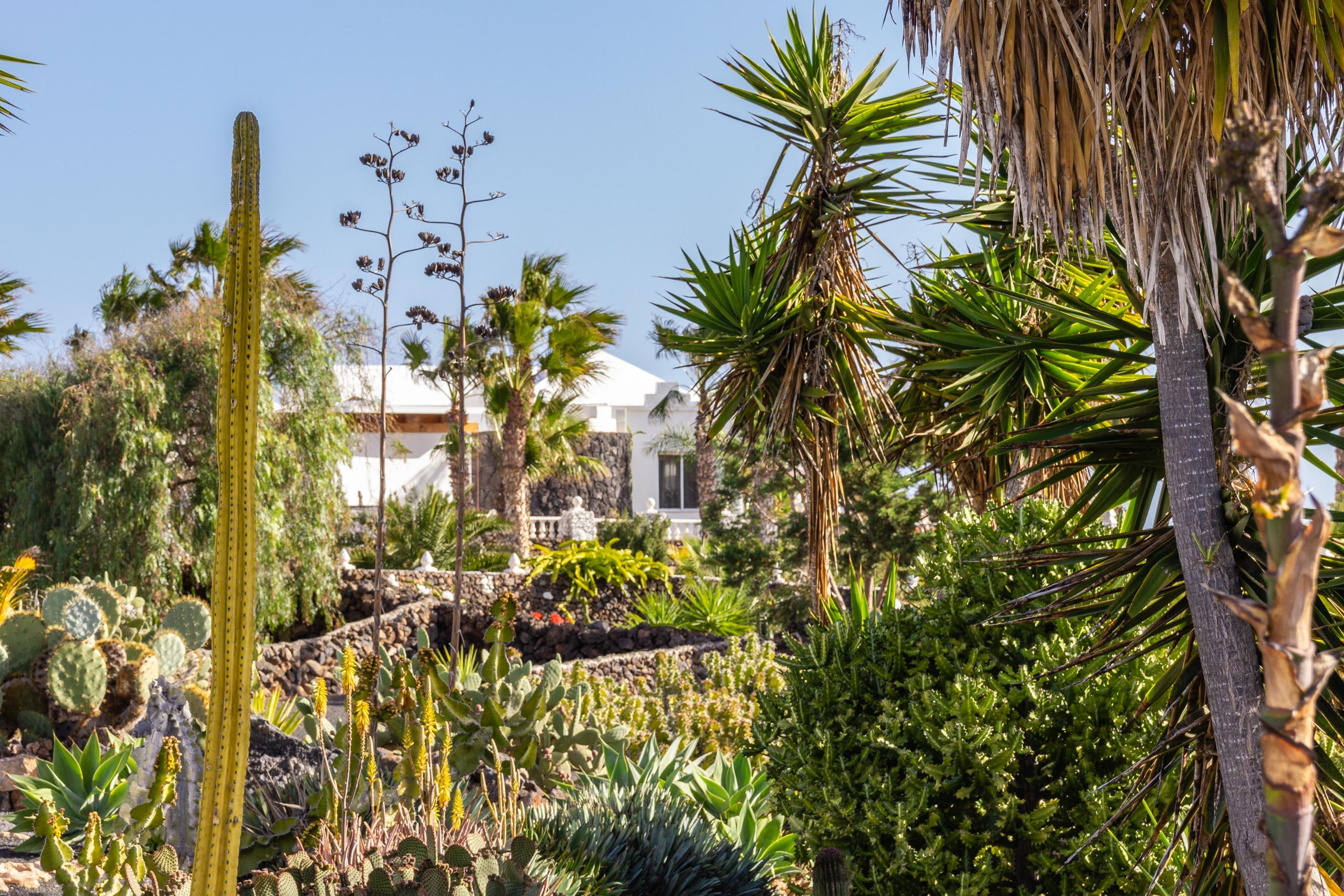 2014 02 Lanzarote Garden 002