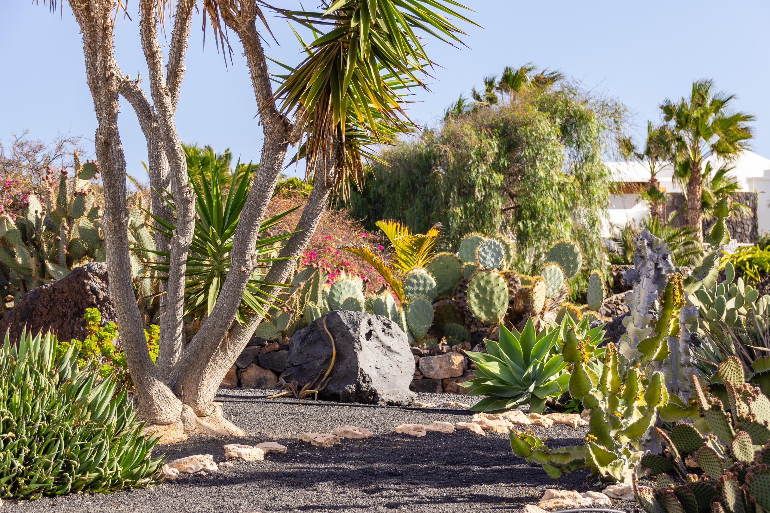 2014 02 Lanzarote Garden 004