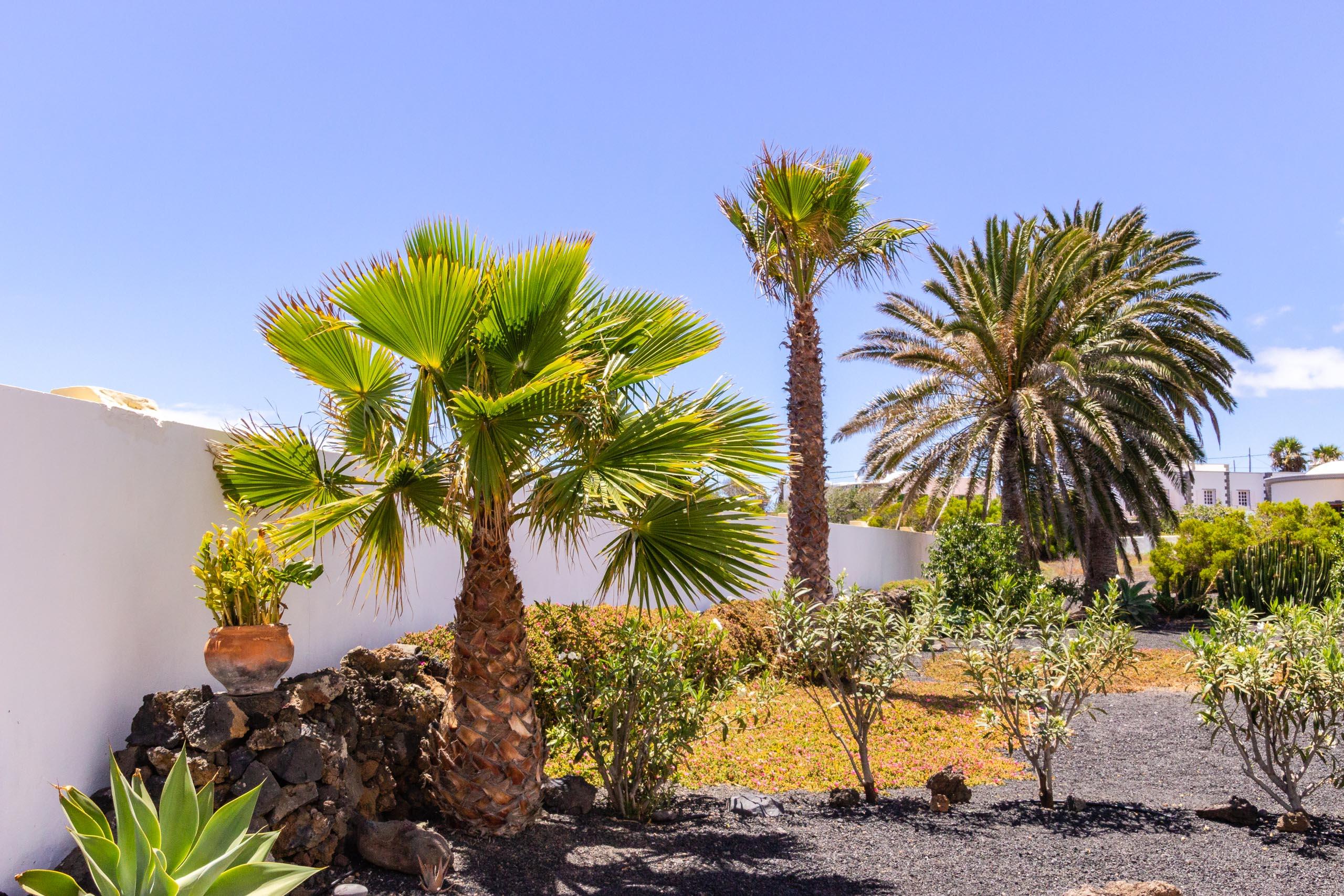 2014 06 Lanzarote Garden 002