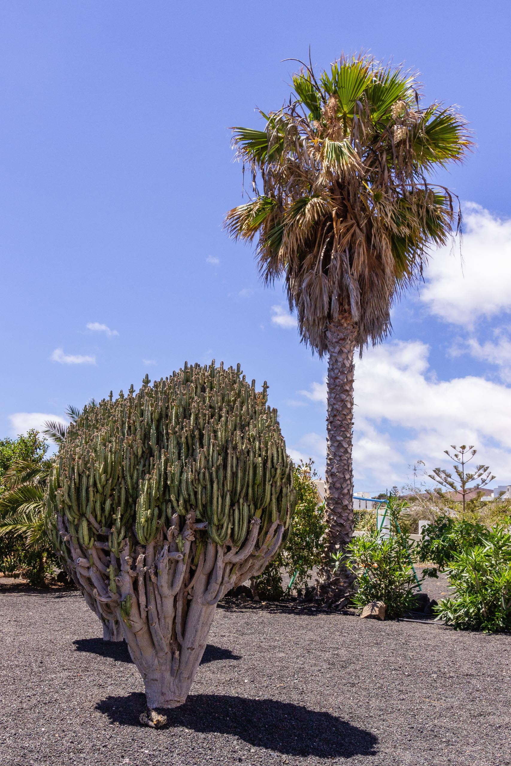 2014 06 Lanzarote Garden 003