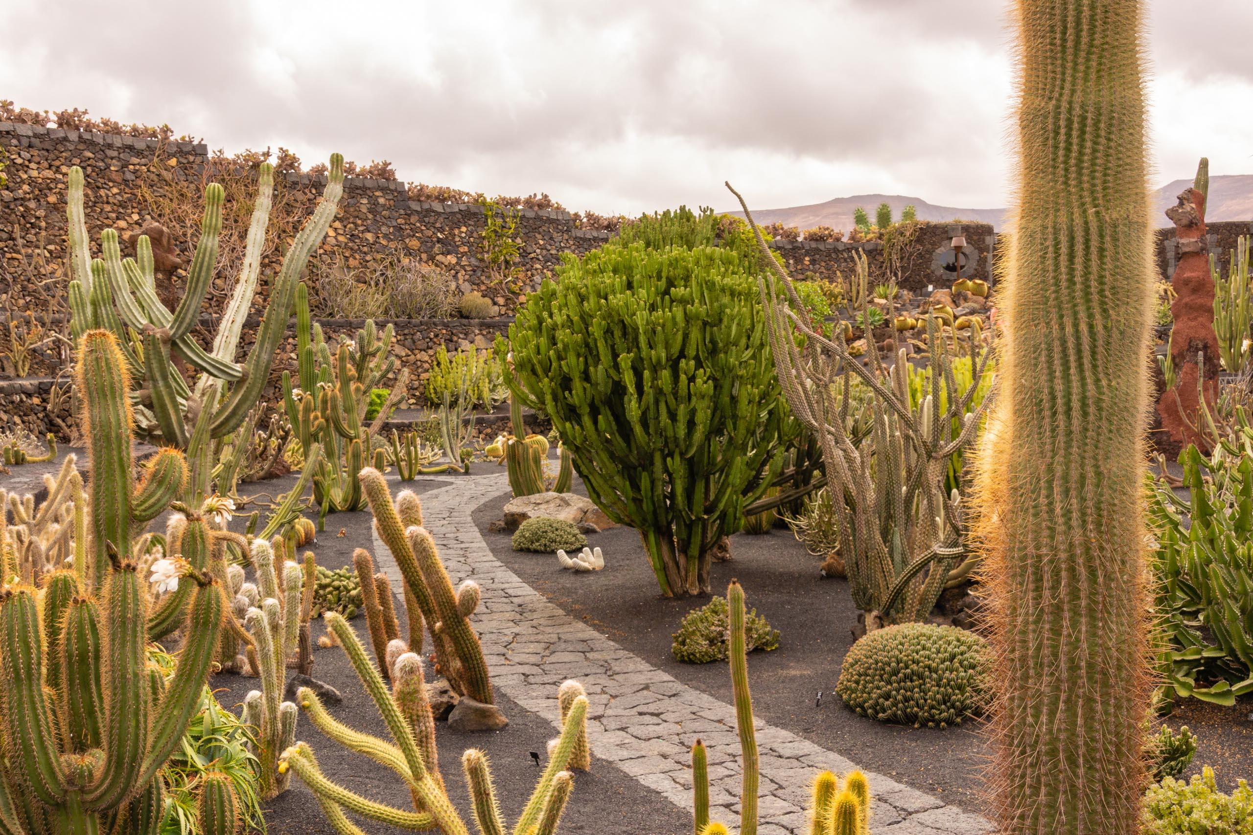 2014 06 Lanzarote JardinDeCactusInGuatiza 004