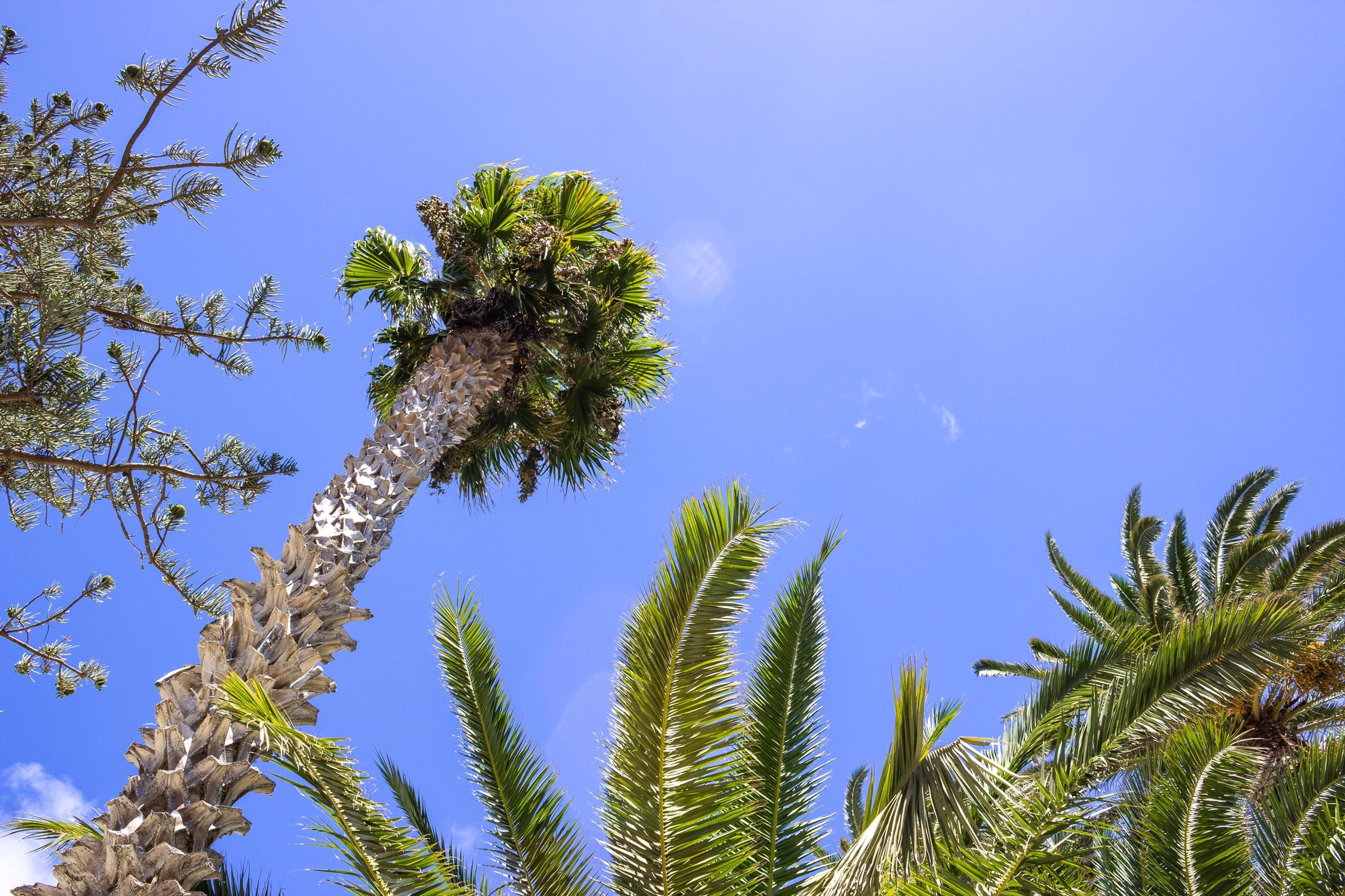 2015 09 Lanzarote PalmTrees 004
