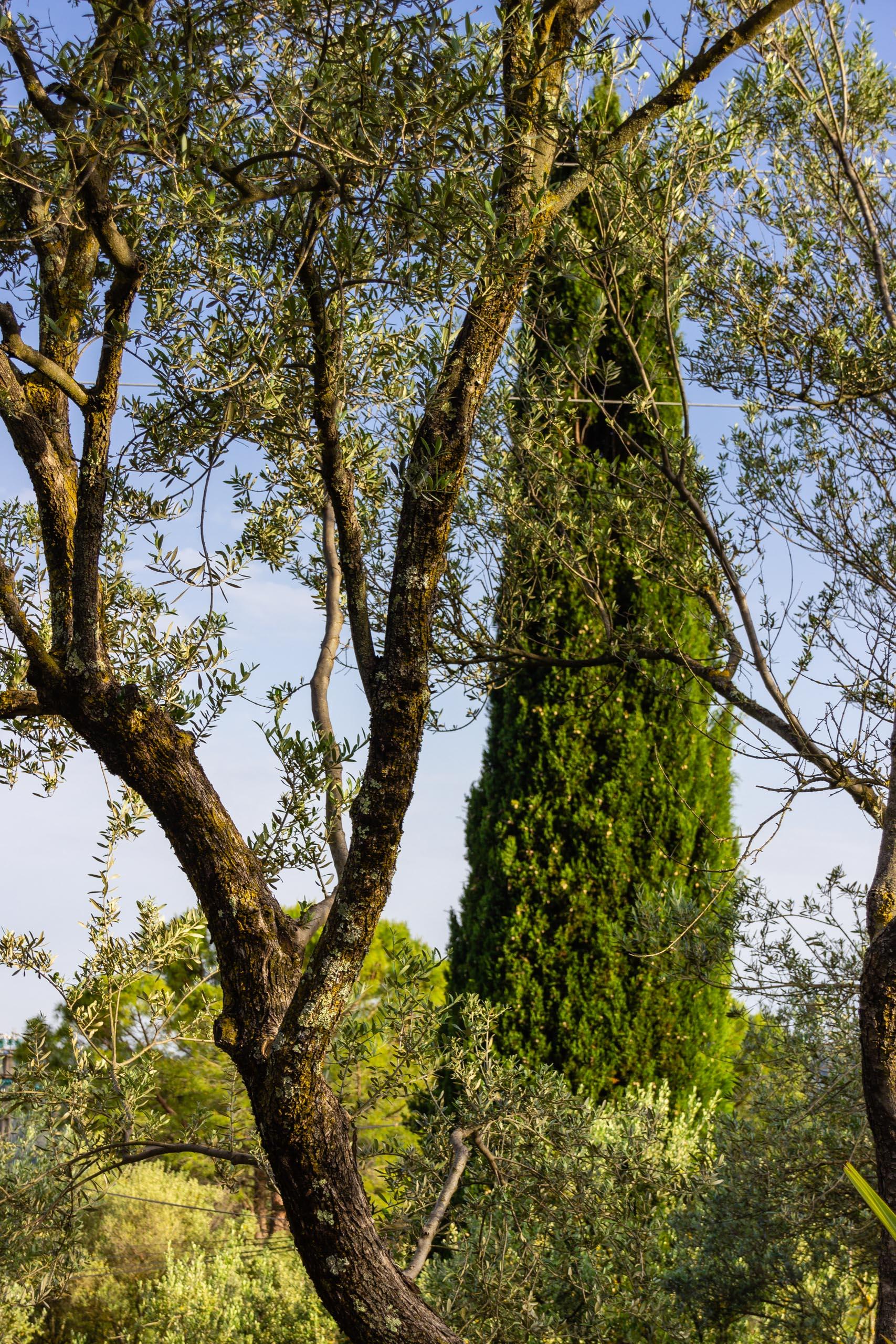 2018 05 Provence Garden 1 004
