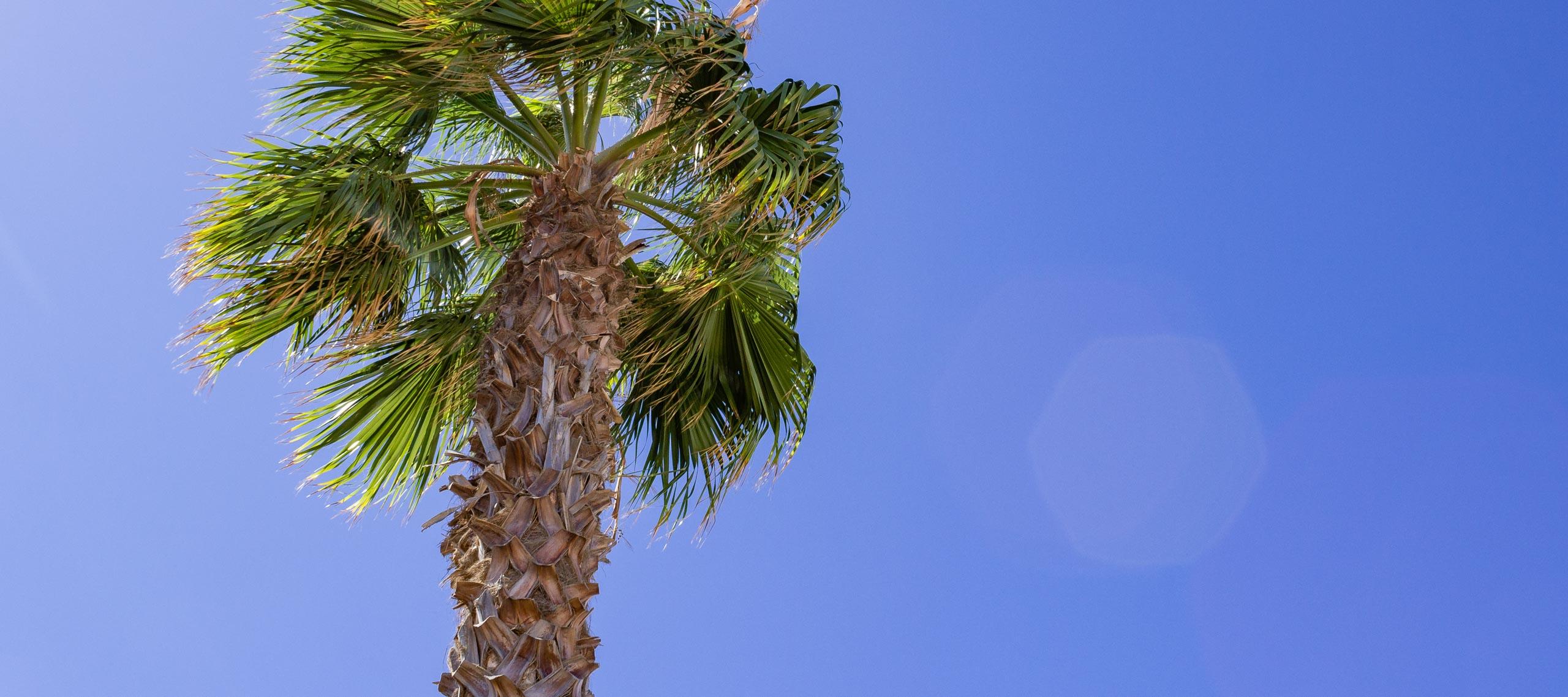 LanzarotePanoramaPalmTrees 003