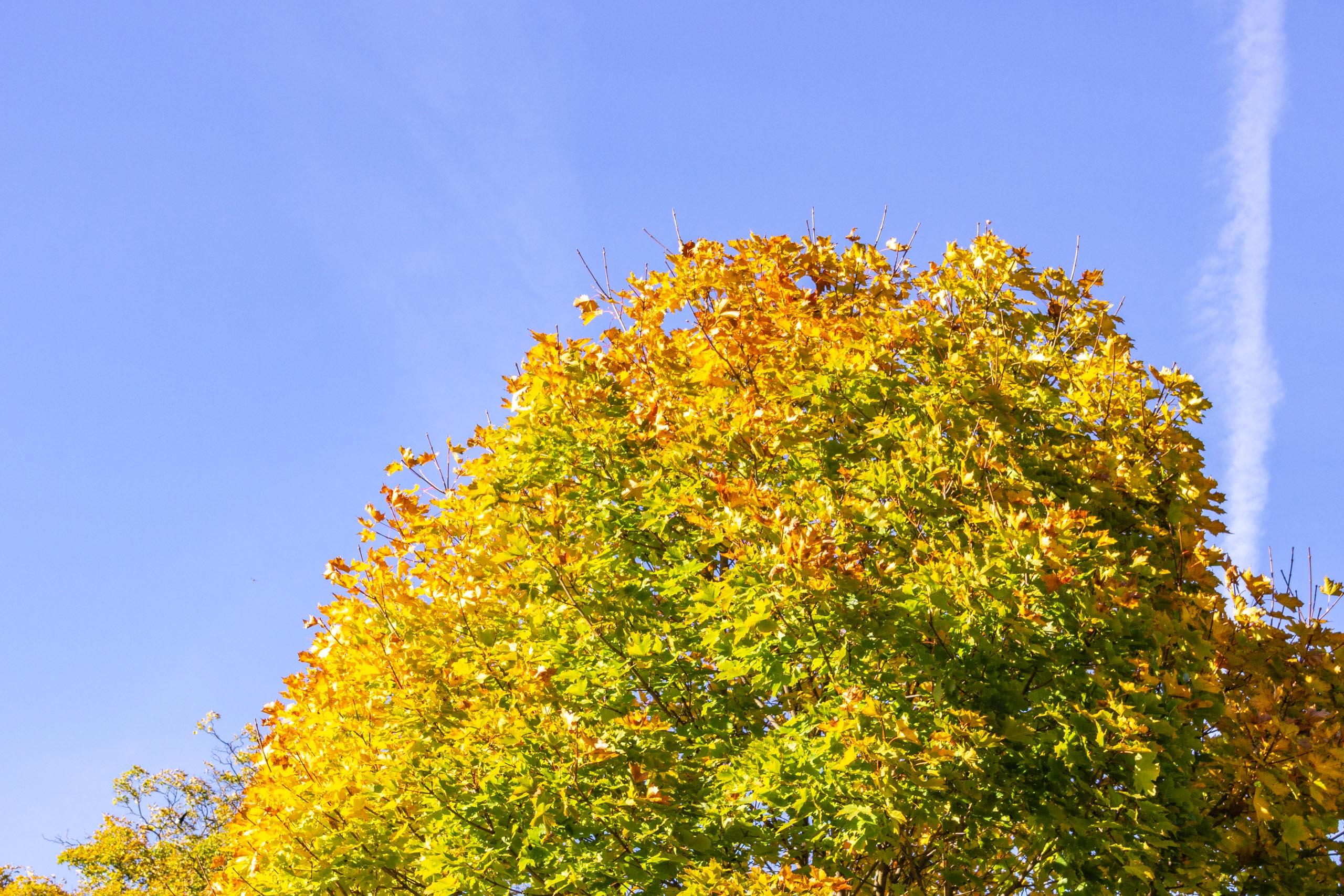 TAT AutumnLeaves 001