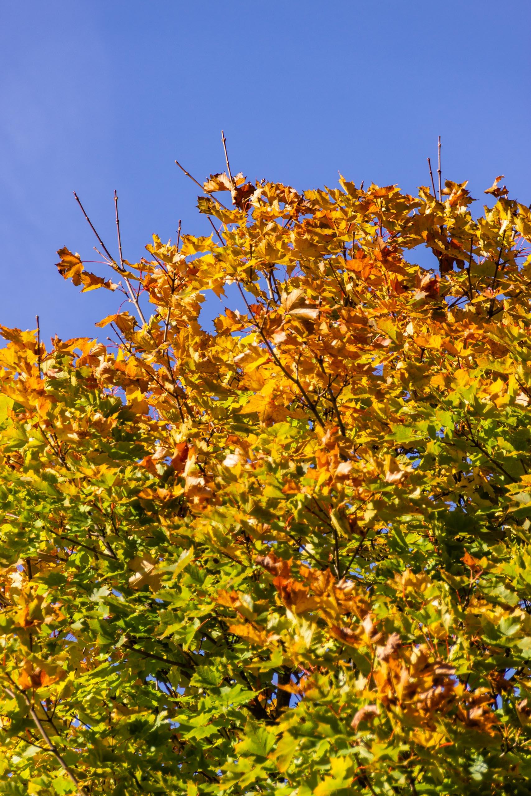 TAT AutumnLeaves 002
