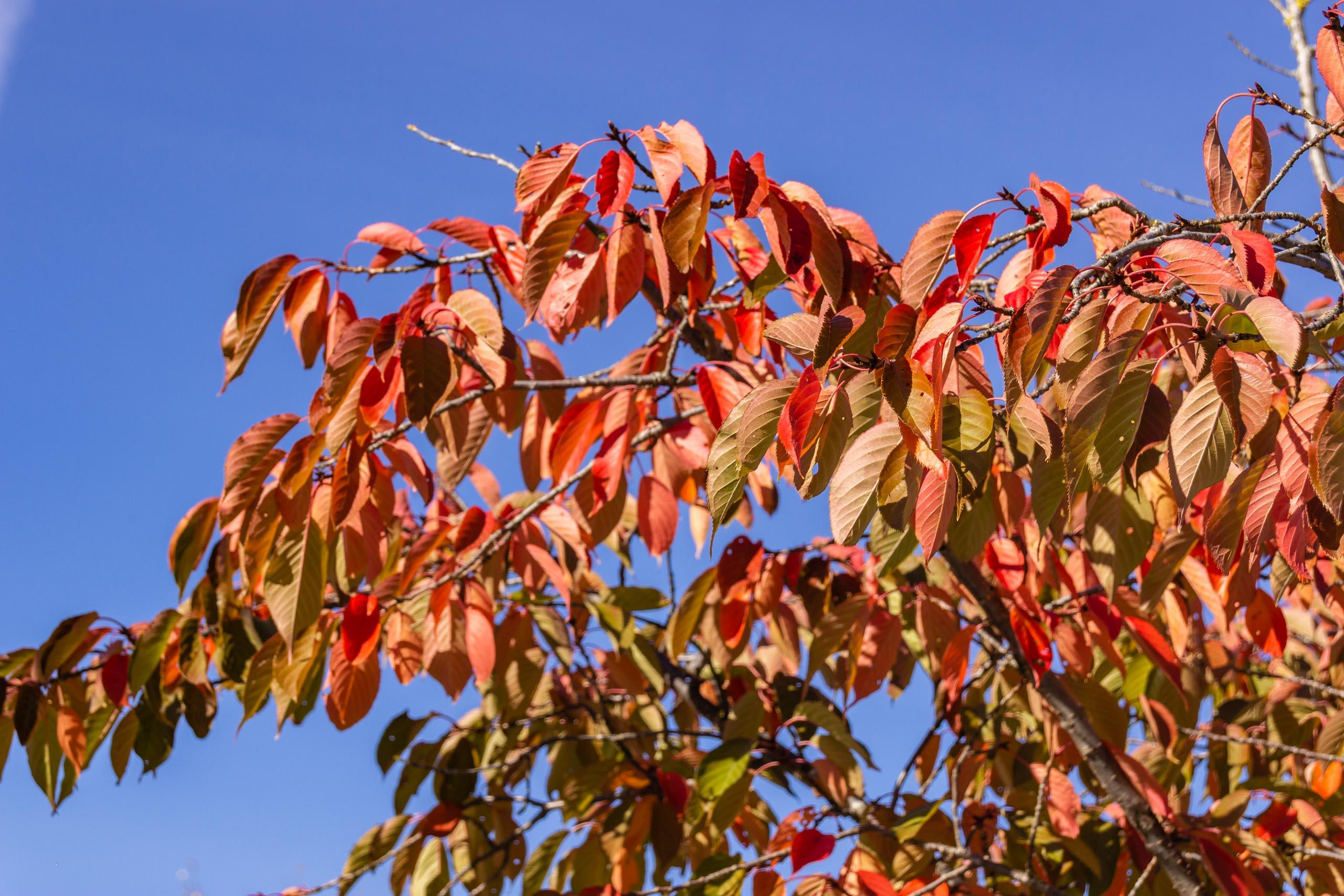 TAT AutumnLeaves 003