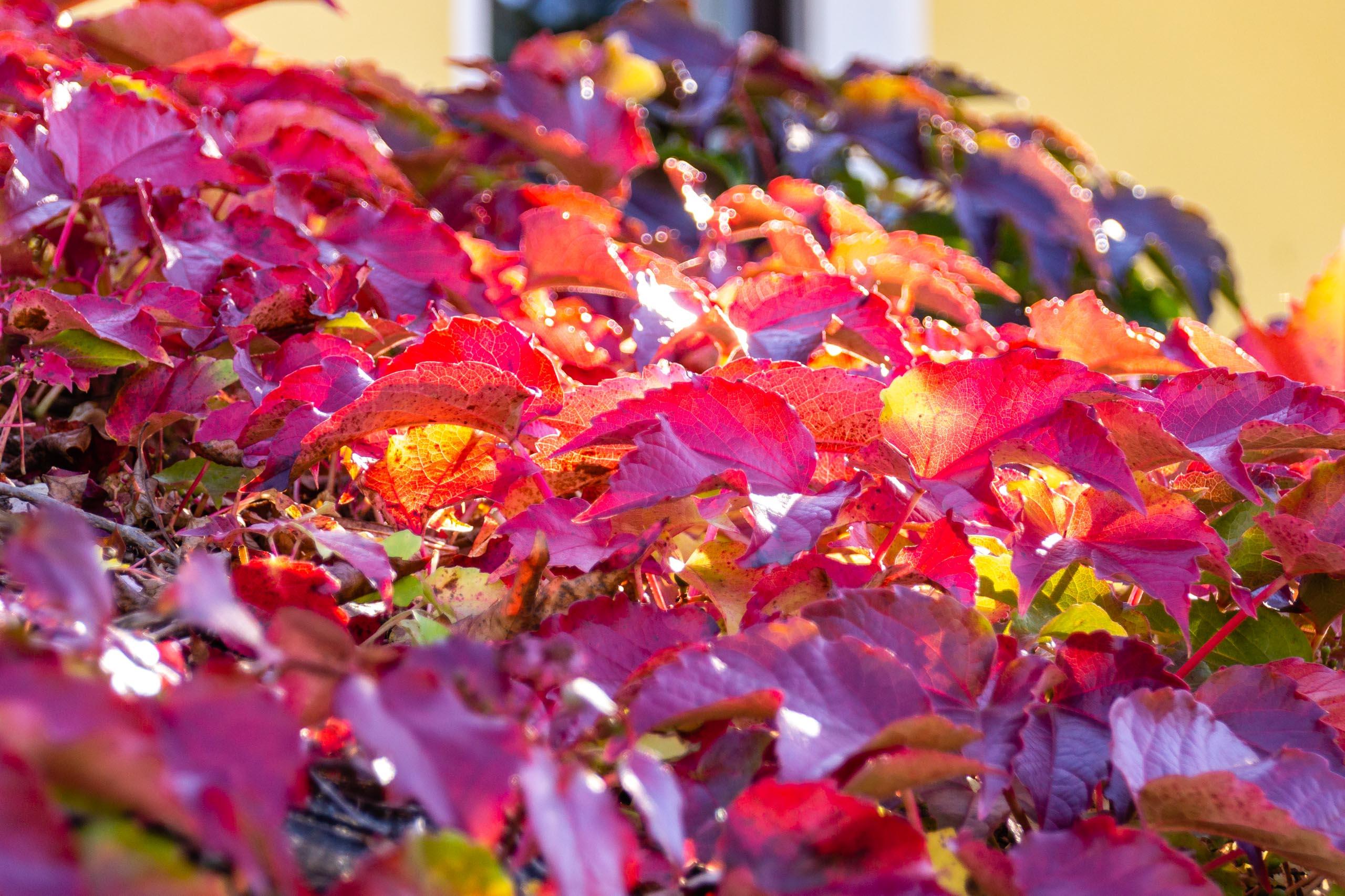 TAT AutumnLeaves 004