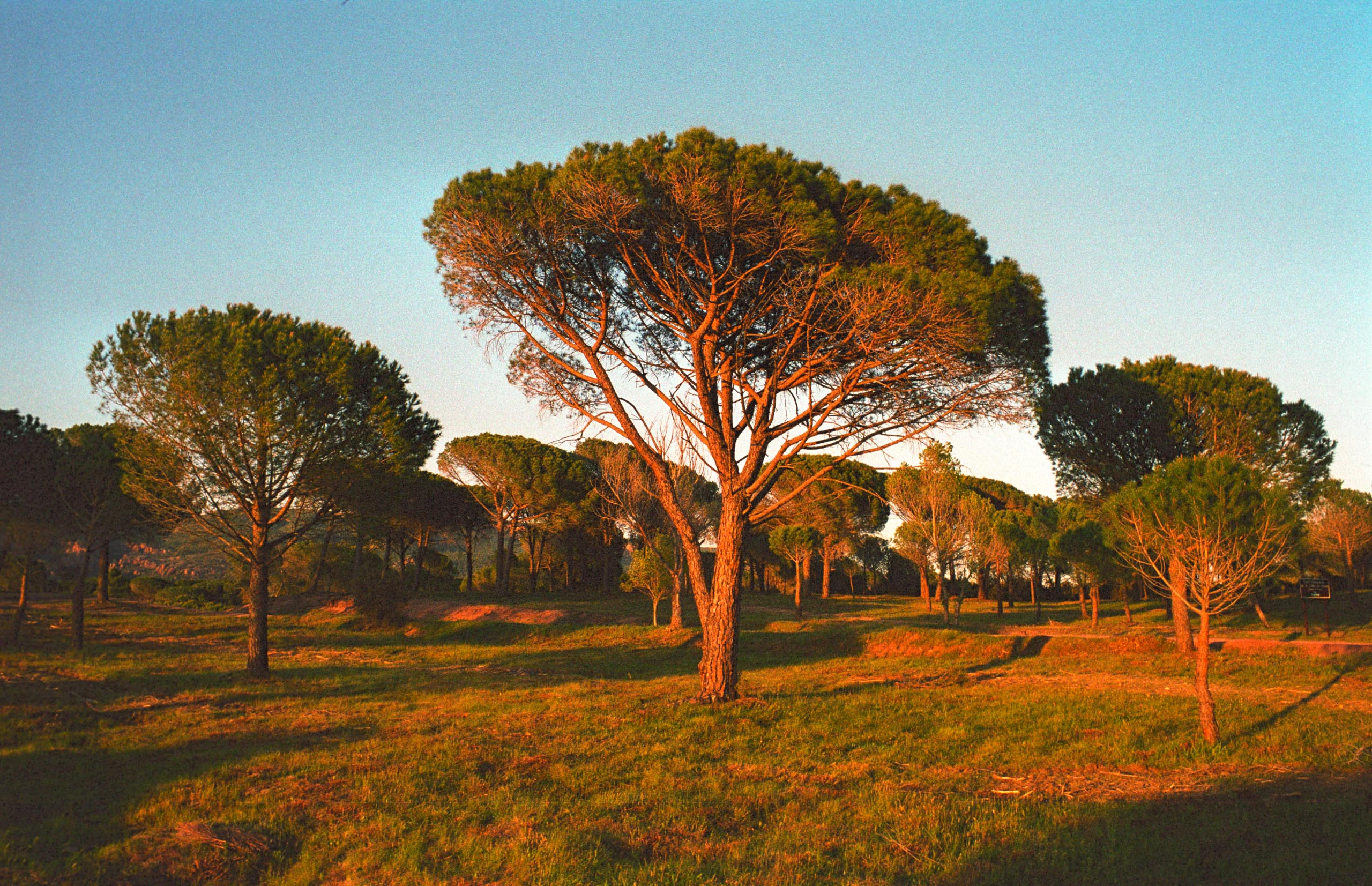 35mm Landscapes 002